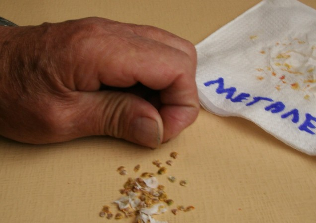 Dad picking and sorting seeds